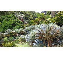 Cycad Garden Photographic Print