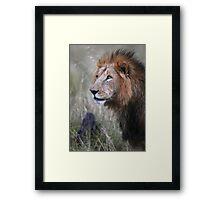 Lion Stare  Framed Print