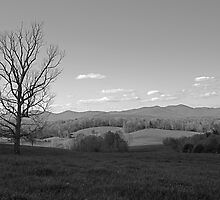 Mountain Meadow by Henri Irizarri