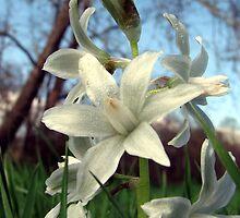 Untamed Flora by LavenderMoon