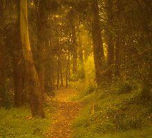 Misty track by Rosalie Dale