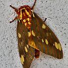 Mothuraa..a..Mothuraa by Sandra Moore