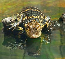 Gargoyle Gator by NaturalPhotos