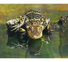 Gargoyle Gator Photographic Print