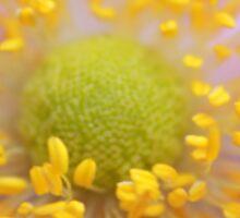 Anemone - JUSTART © Sticker
