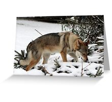 Looking for Goodies Greeting Card