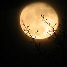Full Moon #1 by gypsykatz
