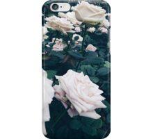 Longwood Garden Roses iPhone Case/Skin