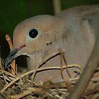 Nesting by Teri Billington