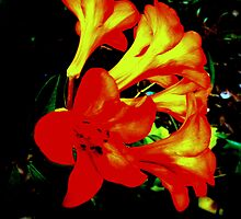 RHODODENDRON ALIGHT by Ekascam