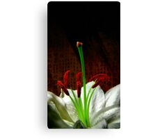Oriental Lily Canvas Print