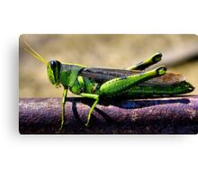 Dressed In Green Canvas Print