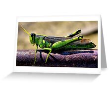 Dressed In Green Greeting Card