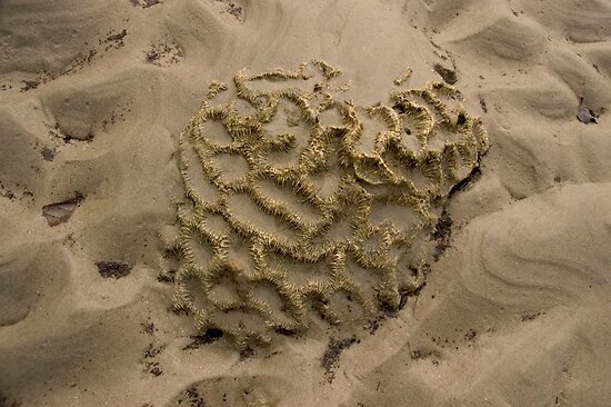 sandy beach formation by sunset