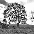 Tree B&W by HELUA