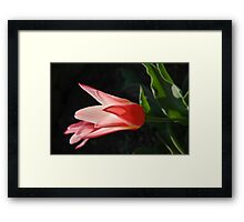 Catching... Framed Print