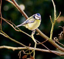 taking a breather...... by Lucan  Netley (LDN Photoart)