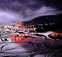 Yuan Yang  by danise tang