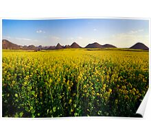 Canola fields in Luo Ping Poster