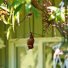 Just Hanging Around by Gail Bridger