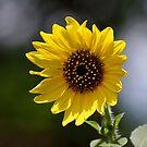 Sun Seeker by Sandra Moore