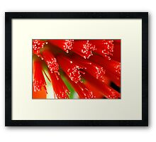Red Raw Framed Print