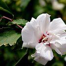 Tree Flower I by Sandra Moore