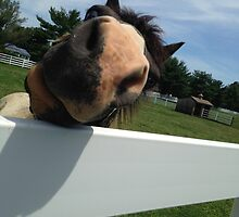 Nelly the Nosey Horse by Asha325
