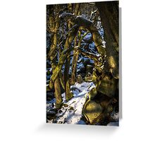 Padley Gorge Winter Greeting Card