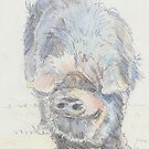Pot Bellied Pig Drawing by MikeJory