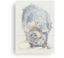 Pot Bellied Pig Drawing Canvas Print