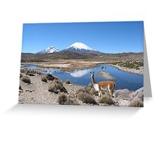 VICUNA - LAUCA NATIONAL PARK Greeting Card