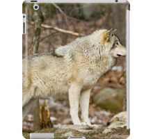 Solitary Timber Wolf iPad Case/Skin