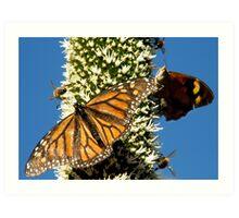 Blackboy, Butterflies & Bees - Mount Barker Summit Art Print