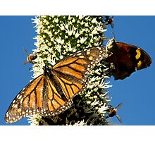 Blackboy, Butterflies & Bees - Mount Barker Summit Photographic Print