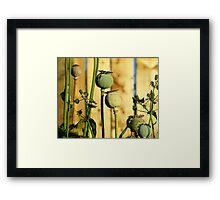 Poppy Heads Framed Print