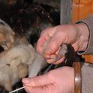 weavers hands by Inese