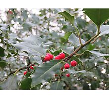 Winter Holly Berries Photographic Print