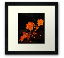 Oak tree leaves in fall colors with dark background. Framed Print