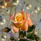 ROSA E BOLLE by Aurora Pintore
