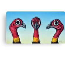 Bush Turkeys Canvas Print