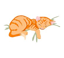 Kitten Sleeping Photographic Print