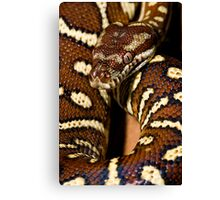 Centralian Carpet Python Canvas Print