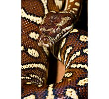 Centralian Carpet Python Photographic Print