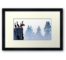 Cormorants on a foggy morning. Framed Print