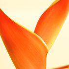 Orange Heliconia on white background by NKSharp