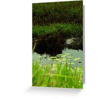 Crocodile wetlands Greeting Card