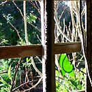 SECRET WINDOW by EdelPankhurst