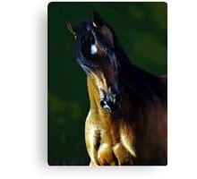 Arabian Horse Watercolor Portrait Canvas Print