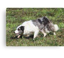 Border Collie Dog Portrait Canvas Print